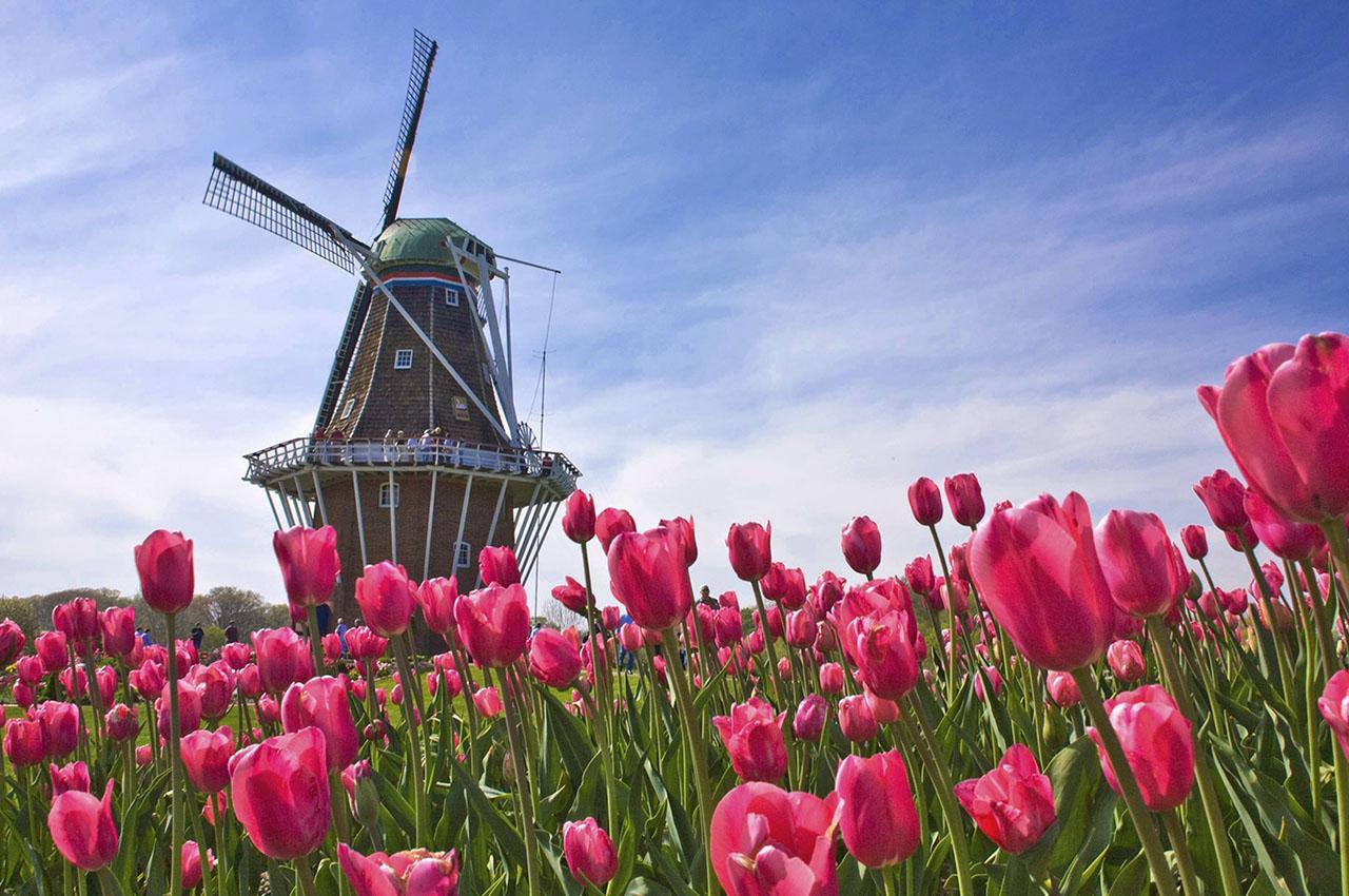 festival des tulipes amsterdam